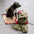 Guarding my Christmas Back Pack, Bourke St  by Pauline Tims