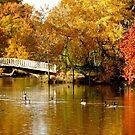 the white bridge in autumn by supergold