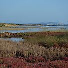 Wetland ;Corfu; Greece by fruitcake