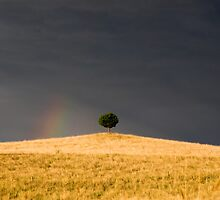 One Tree Hill by DonnaLB