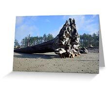 Driftwood Comes in All Sizes Greeting Card