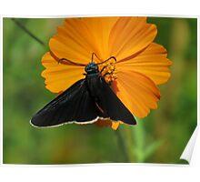 colors of the nature III - colores de la naturaleza Poster