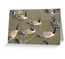 Geese Ahoy Greeting Card