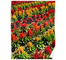 Floral Extravaganza ~ Part Nine Poster