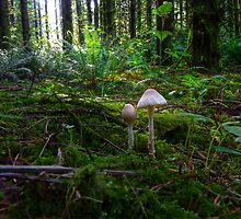 In The Light ~ Wild Mushrooms ~ by Charles & Patricia   Harkins ~ Picture Oregon