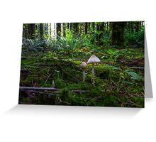 In The Light ~ Wild Mushrooms ~ Greeting Card