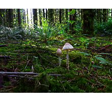 In The Light ~ Wild Mushrooms ~ Photographic Print