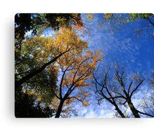 Autumn Skyscape Canvas Print