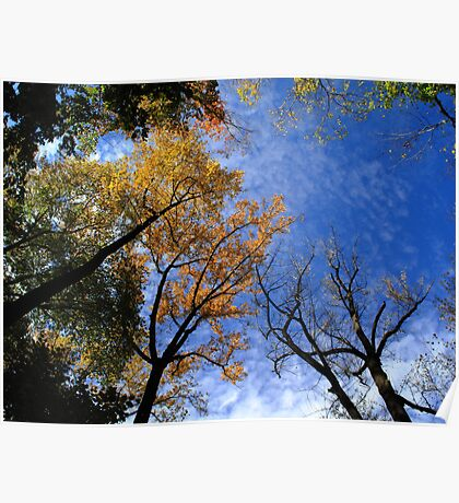 Autumn Skyscape Poster