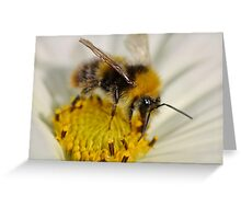 Bumble Landing Greeting Card