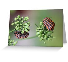 Spots and Stripes Greeting Card
