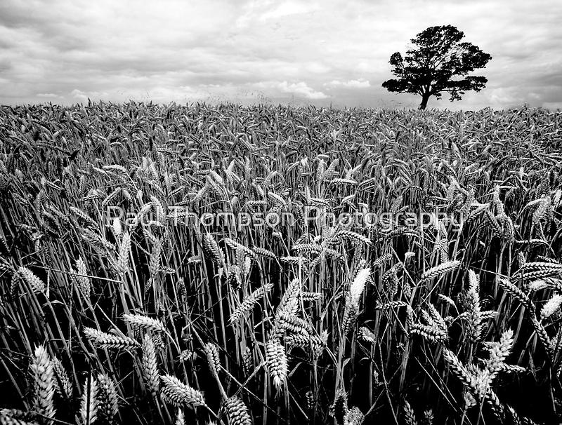 Earn Your Corn by Paul Thompson Photography