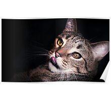 Seductive Tomcat Poster