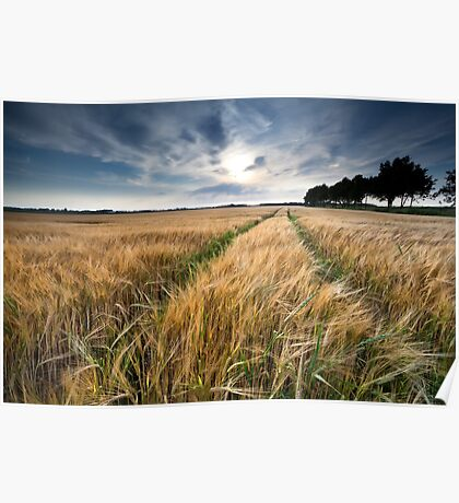 Wheat field Poster