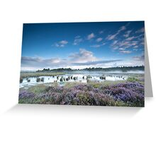 Swamp in the summer Greeting Card