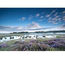Swamp in the summer Photographic Print