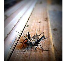 By Jiminy..............It's Jiminy  Photographic Print