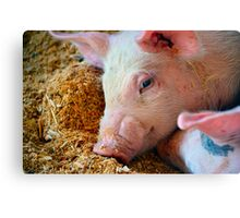 This Little Piggy Canvas Print