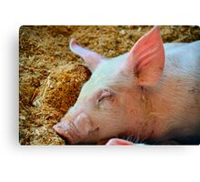 Sleepy Pig Canvas Print