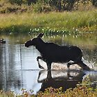 Moose in moose! by gogston