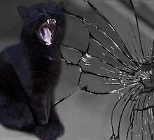 ☝ ☞ MEOWW-CAT'S BROKEN MIRROR -7YEARS BAD LUCK-NO - SUPERSTITION AIN'T THE WAY.☝ ☞ by ╰⊰✿ℒᵒᶹᵉ Bonita✿⊱╮ Lalonde✿⊱╮