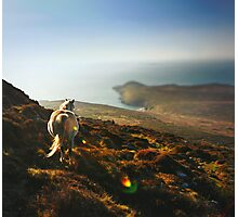 White horse on mountain top overlooking the bay Photographic Print