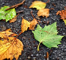Fall leaves scattered on the ground in Autumn by ieatstars