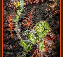 Birth of A Fern (please read description) by Jane Neill-Hancock
