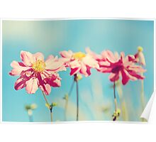 Sunlit Anemone Flowers with Cross Processed Effect Poster