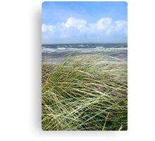 Kerry dune grass Canvas Print