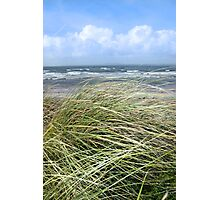 Kerry dune grass Photographic Print