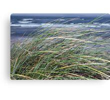 Kerry Ireland beale dune grass Canvas Print