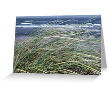 Kerry Ireland beale dune grass Greeting Card