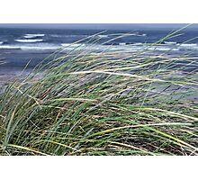 Kerry Ireland beale dune grass Photographic Print
