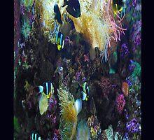 Colorful Fish by Mary Kokoska