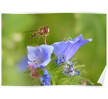 Colourful Nature Poster