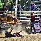 Hey Diddle Diddle - Stroud Rodeo NSW Australia by Phil Woodman