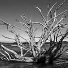 Uprooted tree by MitzPicz