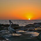 Pelican Sunrise by MitzPicz