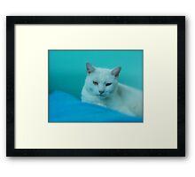 THROW PILLOW FOR CAT LOVERS Framed Print