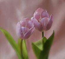 Tip Toe Through the Tulips !!! by AnnDixon