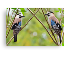 Two Eurasian Jays Canvas Print