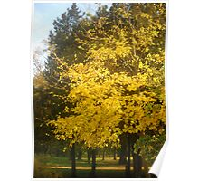Autumn in The Park.Colours. Poster
