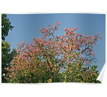 Pink Tree of Autumn. Poster