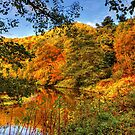 Peaceful Autumn by 242Digital