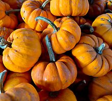 Gourds A' Plenty by Dennis  of Legend Photography