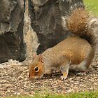 Red Squirrel by Adrian McGlynn