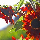 Autumn Sunflowers by Chet  King