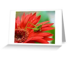 The Grasshopper and the Daisy Greeting Card