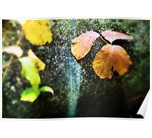 Leaves Against a Rock Poster
